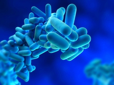 The XV Congress of Environmental Health focuses on the prevention and control of Legionella